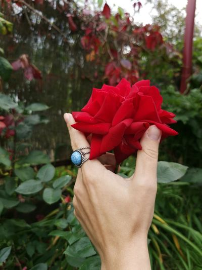Midsection of woman holding red flowering plant