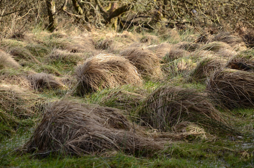 Wig farm? Tufts Grass Nature Outdoors Plant