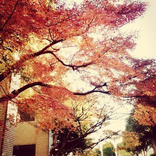 もう一枚紅葉です(^ω^) Fall Fall Leaves Japan Beautiful