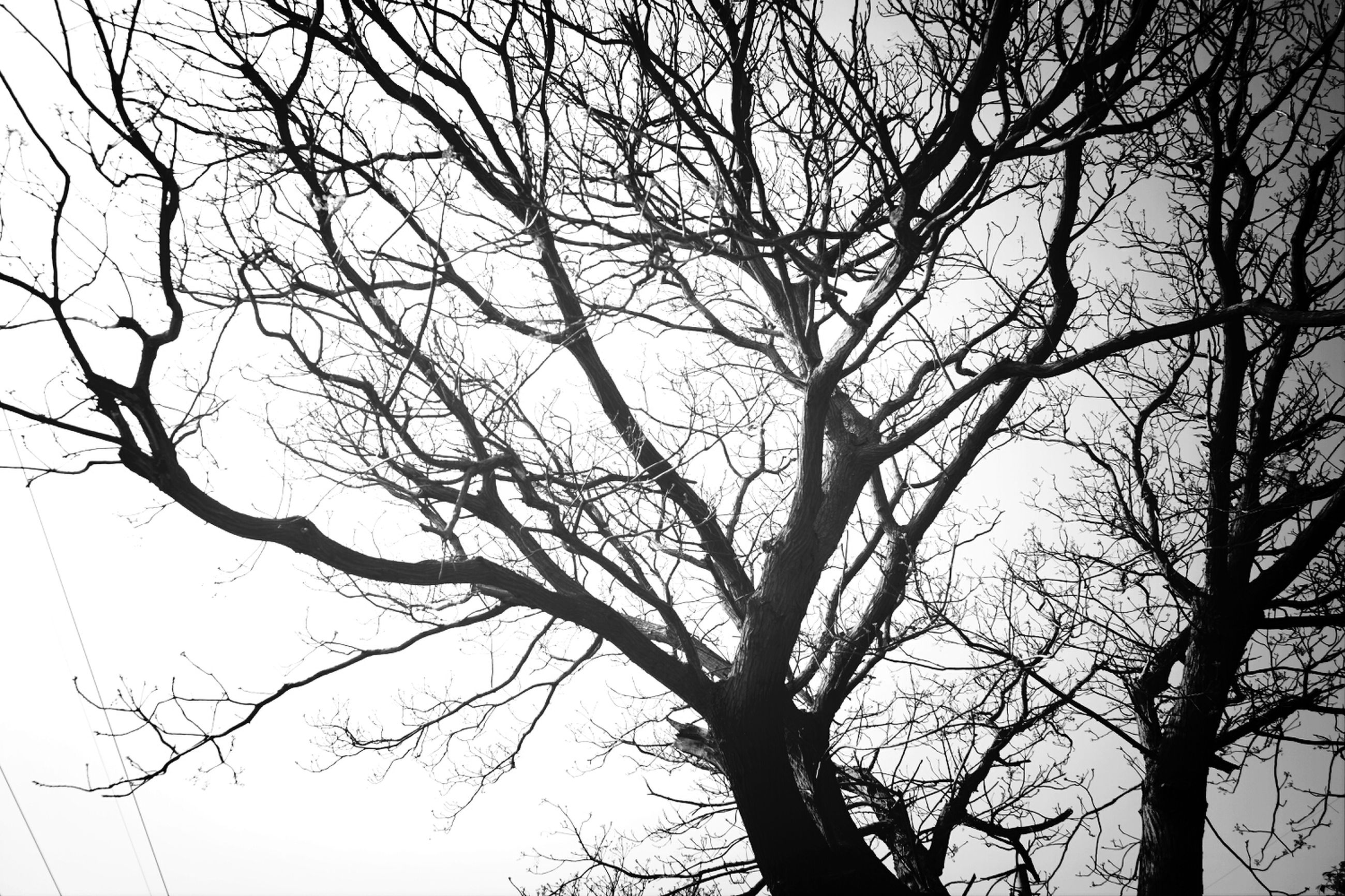bare tree, branch, tree, low angle view, nature, tranquility, tree trunk, silhouette, sky, beauty in nature, clear sky, scenics, growth, outdoors, no people, day, tranquil scene, dead plant, dusk, backgrounds