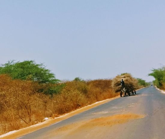 Sand Tree Nature Clear Sky Senegal Africa Afrique Donkey Animals Charette Paille