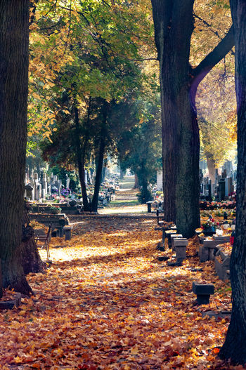 autumn at memorial ways Autumn Bench Change Day Direction Fall Falling Footpath Leaf Leaves Nature No People Outdoors Park Park - Man Made Space Park Bench Plant Plant Part Seat The Way Forward Tranquility Tree Tree Trunk Treelined Trunk