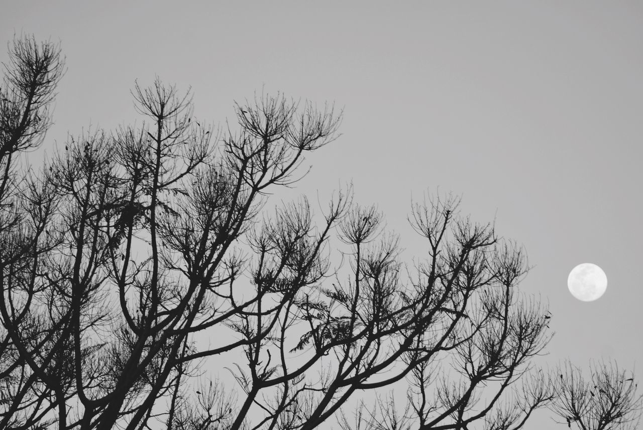 bare tree, nature, moon, beauty in nature, low angle view, tranquility, clear sky, tranquil scene, scenics, tree, outdoors, sky, branch, no people, day, astronomy