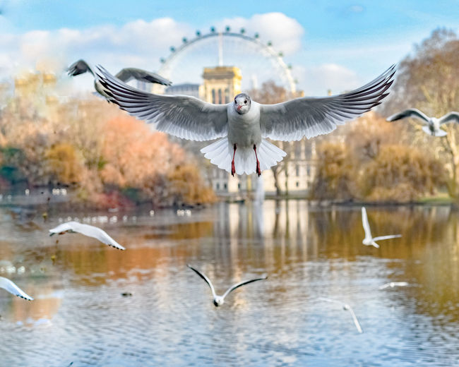 Seagulls flying over lake