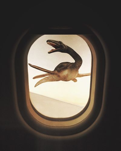 Close-up of airplane flying seen through window