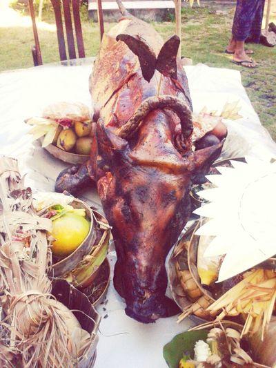 Suckling Pig Tradition Culture Bali Balinese