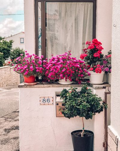 Flowers Plant Growth Flowering Plant Flower Building Exterior Architecture Nature Built Structure Fragility Vulnerability  Potted Plant Wall - Building Feature No People Freshness Red Pink Color Sunlight Day Outdoors Beauty In Nature