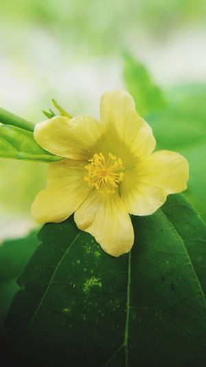 makro single flower Flower Head Flower Yellow Leaf Springtime Petal Daffodil Blossom Close-up Plant
