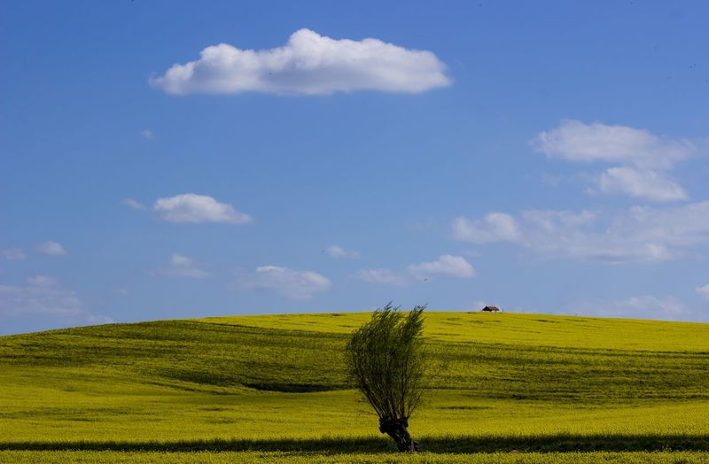 Weserbergland Niedersachsen Lower Saxony Germany Nature EyeEmNewHere Weserbergland Landscapephotography Landschaft Landscape Tree Cereal Plant Rural Scene Agriculture Field Crop  Farm Sky Landscape Cloud - Sky Cultivated Land