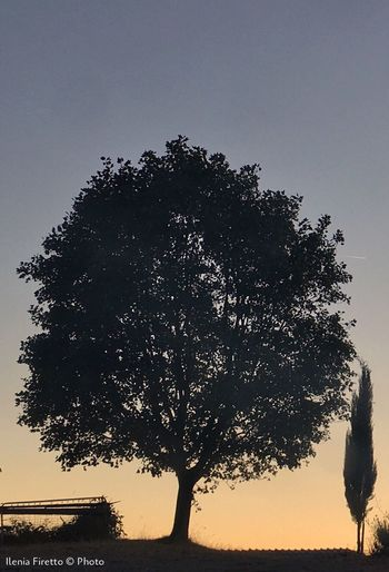Silhouette tree against clear sky