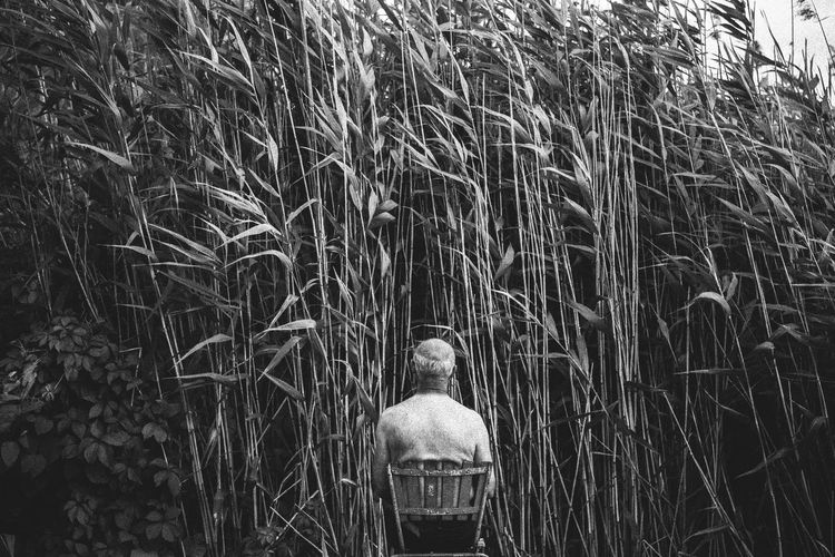 Alone Blackandwhite Budapest Chair Day Feelings Grass Hope Narrow Nature Nature Oldman Outdoors Perspective Portrait Rear View Reed Solitude Solitude And Silence Strait Thoughts Time