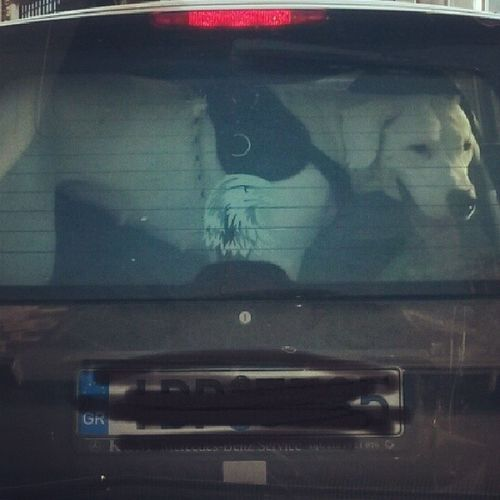 Εχμ..Συγγνώμη αλλά εχετε λιγο σμαρτ στον σκύλο σας... :-/