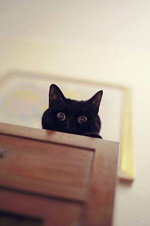 Kitty Kitten Kittens Kitty Cat Kittycat Cat Cats Cat♡ Cat Lovers Catsofinstagram Catoftheday Black Cat Black Cats Black Cat Is Just So Beautiful. Animal Animals