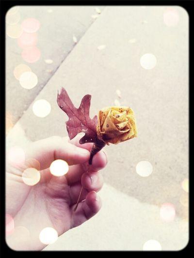 Leaves Roses Fall Making Roses