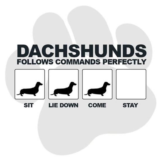 Just a Dachshund 😄 Dogs Dachshunds I Love My Dog Dachshund Dog Teckel Dackel Weeniedog