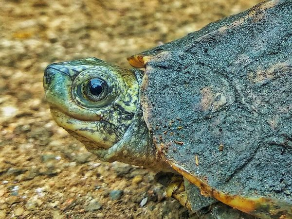 #turtle #photography #MobilePhotography #Nature  #beautiful #macro