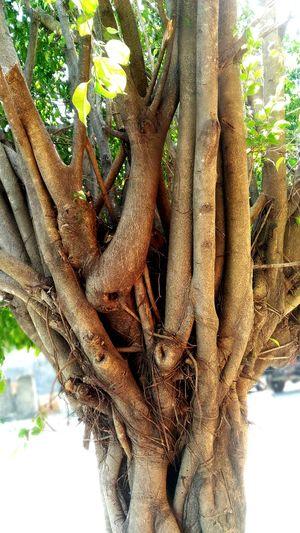 Tree No People Nature Plant ZenfoneSelfie Tree Trunk