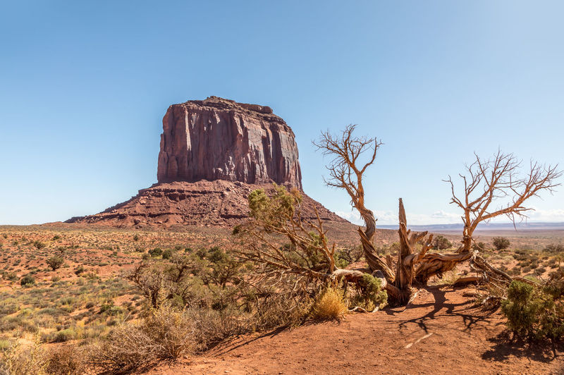 Icon of the monument valley and a dead tree