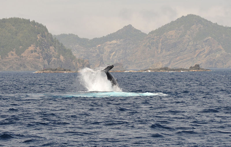 Nature Photography Nature_collection Ogasawara Island Tail Tokyo,Japan Water_collection Whale Whale Watching