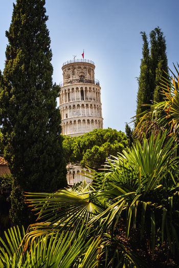 view of the leaning tower in pisa throuth palm Piazza Dei Miracoli Pisa Postcard Architecture Building Building Exterior Built Structure Day Green Color Growth History Leaning Tower Nature No People Outdoors Palm Leaf Palm Tree Plant Sky The Past Tourism Tower Travel Destinations Tree Tropical Climate 17.62° My Best Photo