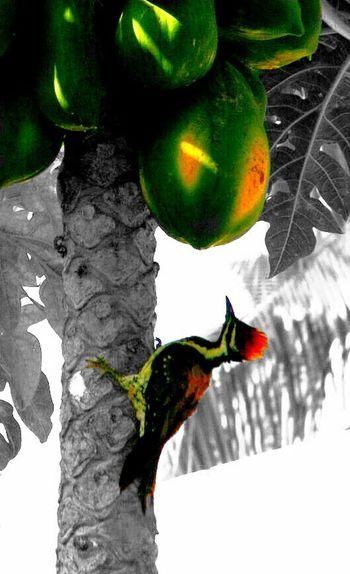 Taking Photos Birds Nature Monochrome