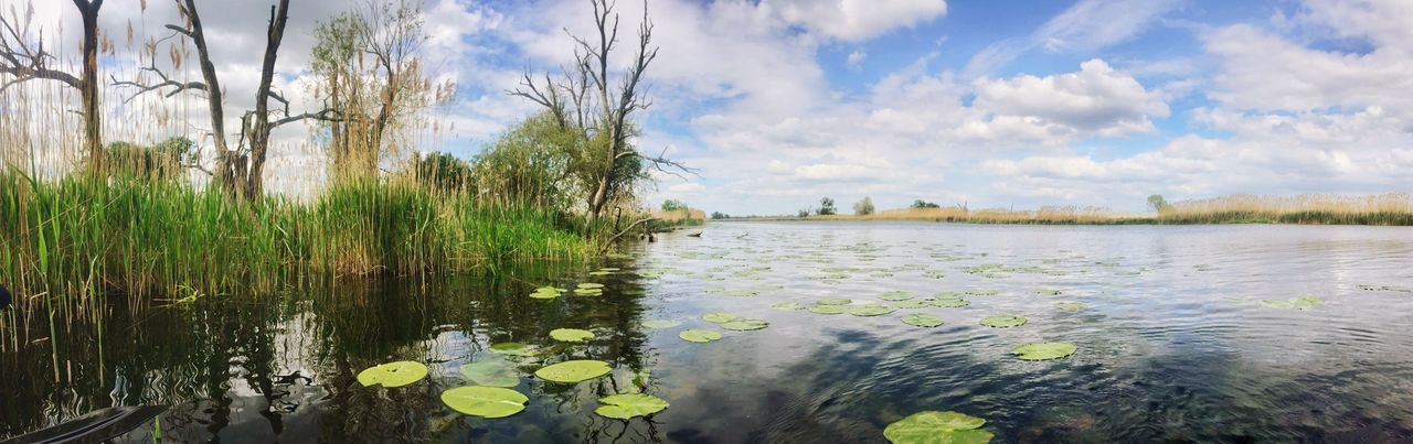 Landscape Landscape_Collection Panorama Nature Nature_collection River Water Water Lily Oder Beauty In Nature Beautiful Nature EyeEm Nature Lover
