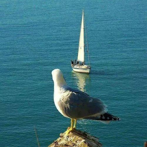 Martılar ki sokak cocuklaridir denizin ... Canyücel Mutlu  Pazarlar