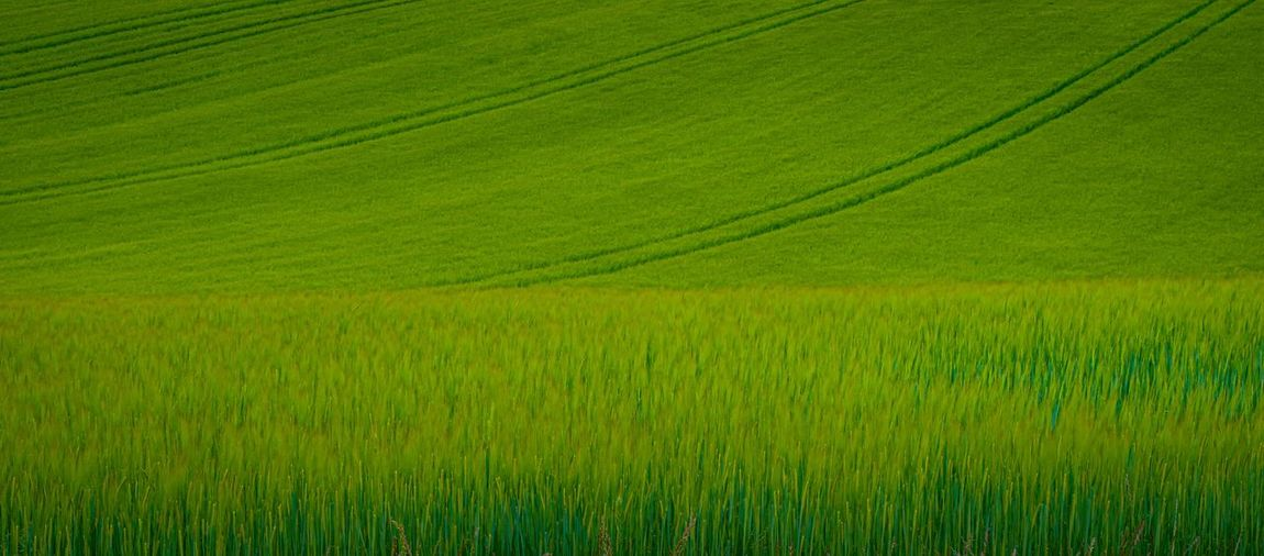 Young barley Field Rural Scene Agriculture Landscape Growth Plant Land Environment Beauty In Nature Green Color Crop  Scenics - Nature Farm Tranquil Scene Tranquility No People Nature Day Outdoors