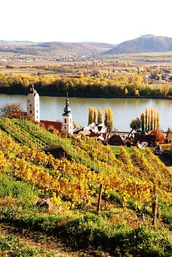 Nature Tranquility Water Scenics Danube River Austria Wachau Spitz An Der Donau Autumn Vineyards  Foliage Mountain Outdoors No People Day Beauty In Nature Travel Destinations Tranquil Scene Landscape Architecture Plant Grass Sky