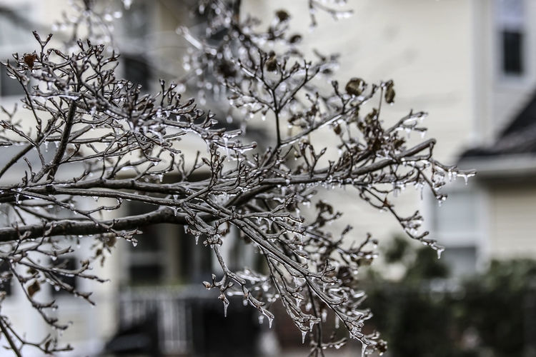 Close-up of frozen plant against trees during winter