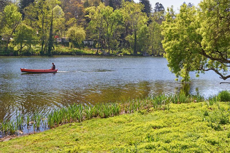 Water Tree Boat
