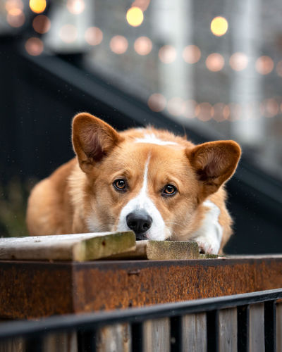 Portrait of dog looking at railing