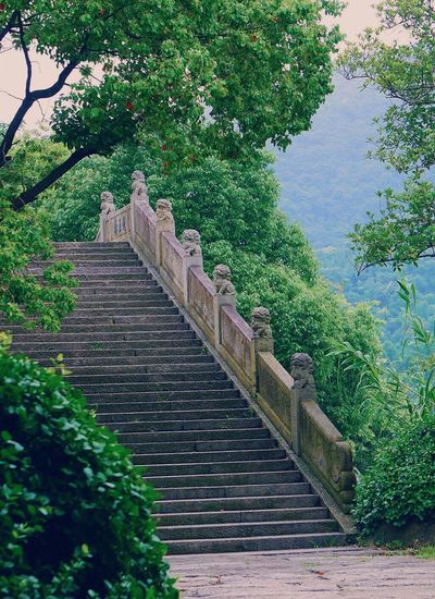 Staircase amidst trees and plants against sky