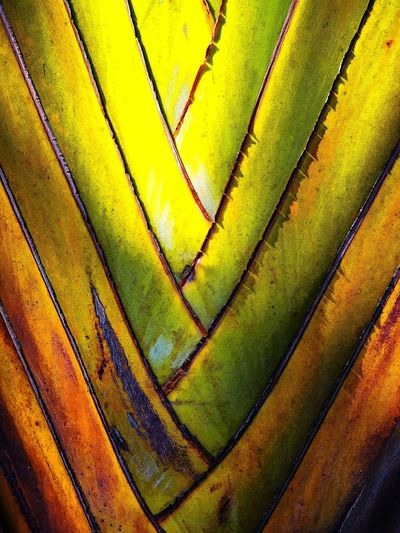 Low Angle View Abstract Full Frame Outdoors Plant EyeEm Nature Lover Beauty In Nature Artistic Expression My Unique Style EyeEm Best Shots Exceptional Photography Abstract Expressionism EyeEm Gallery Multi Colored Getting Inspired Leaf Photography Close-up Leaf Vein Leaf Pattern Leaf 🍂 Wilderness Detail Backgrounds Leaf Banana Tree Leafs Colors