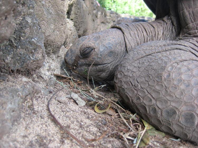 Animals Giant Tortoise Tortoise