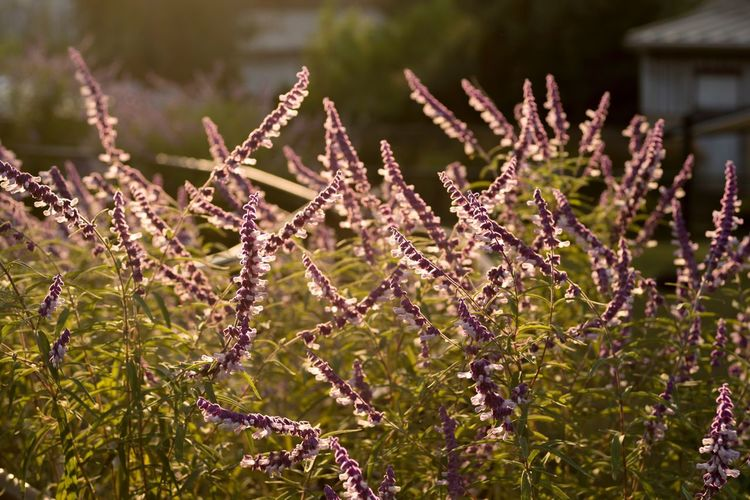 Sunset flowers Growth Plant No People Focus On Foreground Tranquility Freshness Beauty In Nature Flower Warmthandsunshine Warmth Nature Outdoors Beauty In Nature Day Close-up Fragility