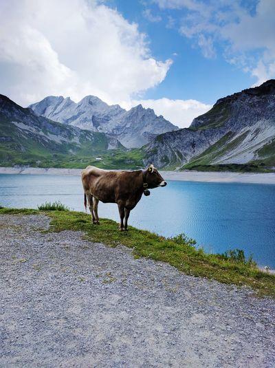 Horses on lake against mountains