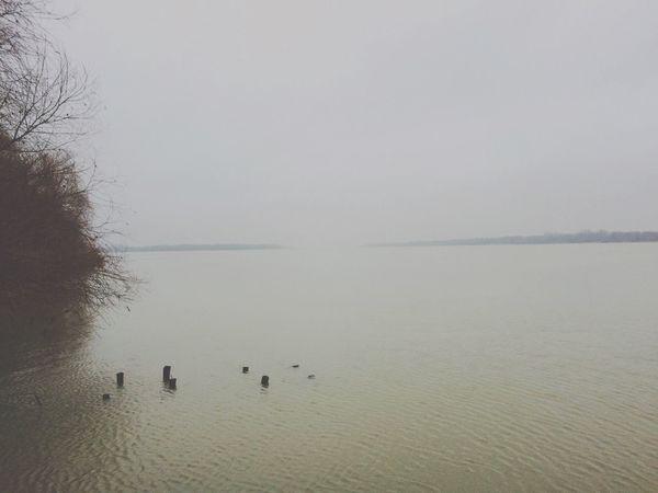 Vilkovo Danube River Foggy Tree