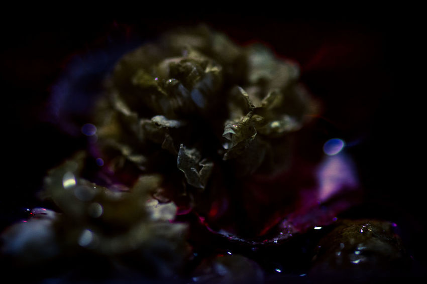 EVERYTHING THAT HAS A BEGINNING HAS AN END ◀️ Faded Flowers Nightmare Abstract Atmospheric Mood Capture The Moment Colour Of Life Darkness And Light EyeEm Best Shots EyeEm Nature Lover EyeEmBestPics Fine Art Fine Art Photography Getting Inspired Light And Shadow Macro Nature Plants Still Life Taking Photos Water Eyeemphoto Silence Mysterious