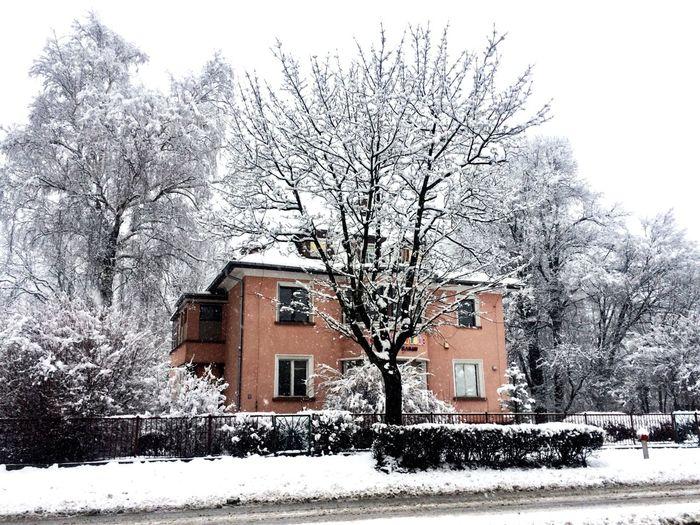 Winter Building