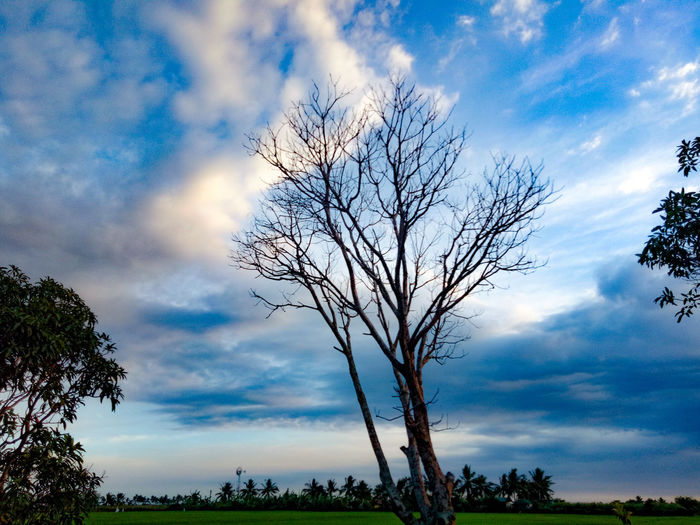 stand still, even around you are falling. Withered Tree Standstill StandStrong Tree Tree Trunk Blue Silhouette Tree Area Branch Dramatic Sky Sky Landscape Cloud - Sky First Eyeem Photo
