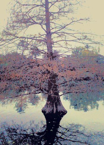 TreePorn Lake Lakewinter Watercolor
