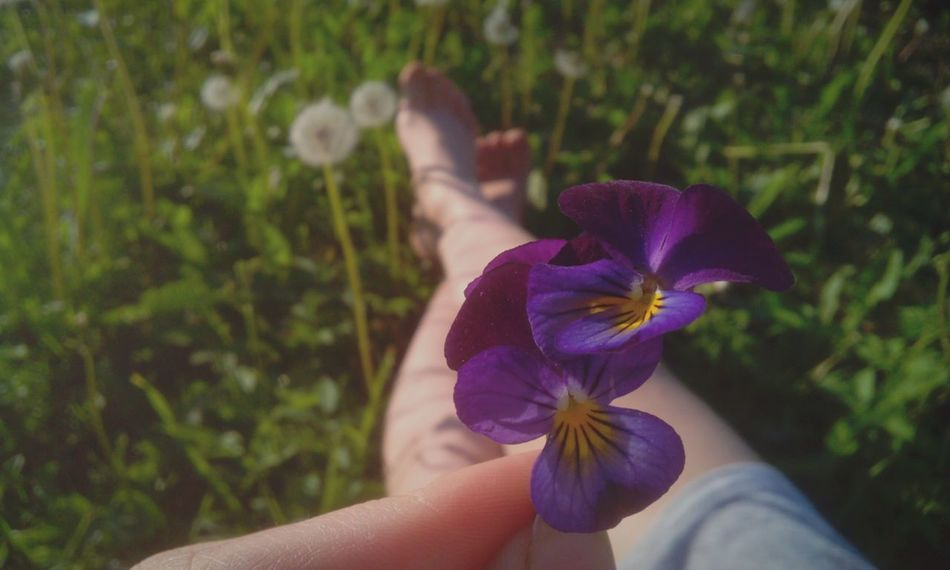 Shunshine And Blossom Taking Photos Summer Views The Essence Of Summer Relaxing Heartsease Violet Flowers Summertime Beautiful Nature Enyoying