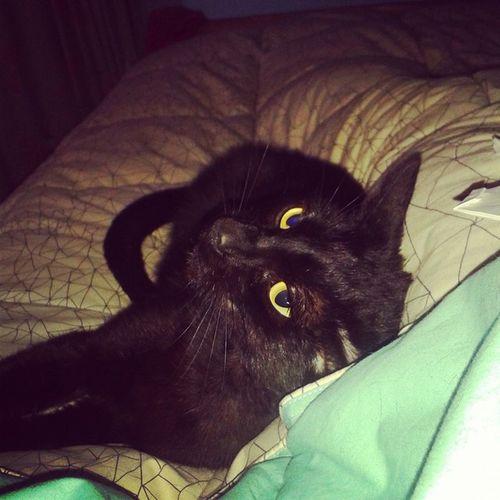 Freya Merecuerdaapiero :$ Freyathekitty Cat BLackCat Ilovefreya Catlover Negra Linda