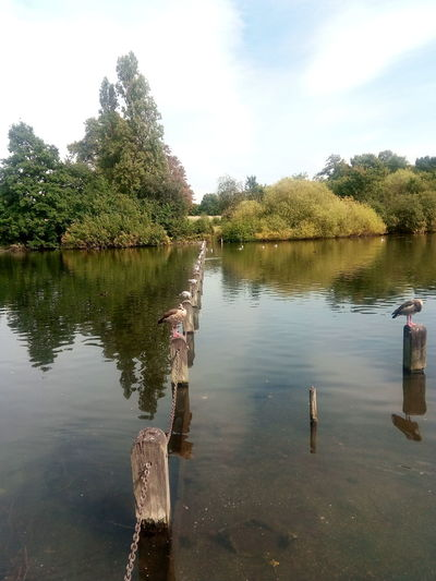 Reflection Water Outdoors Trees Nature Scenics Beauty In Nature Birds Kensington Gardens Perched Birds Perching Birds Sky Clouds