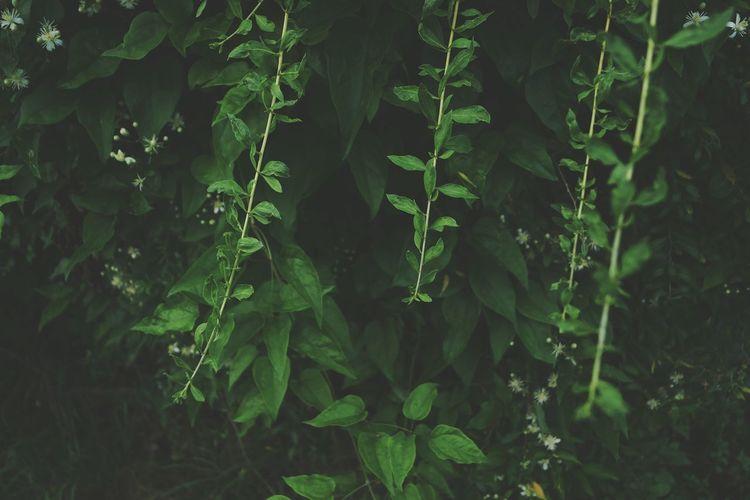 Tree Thick Leaf