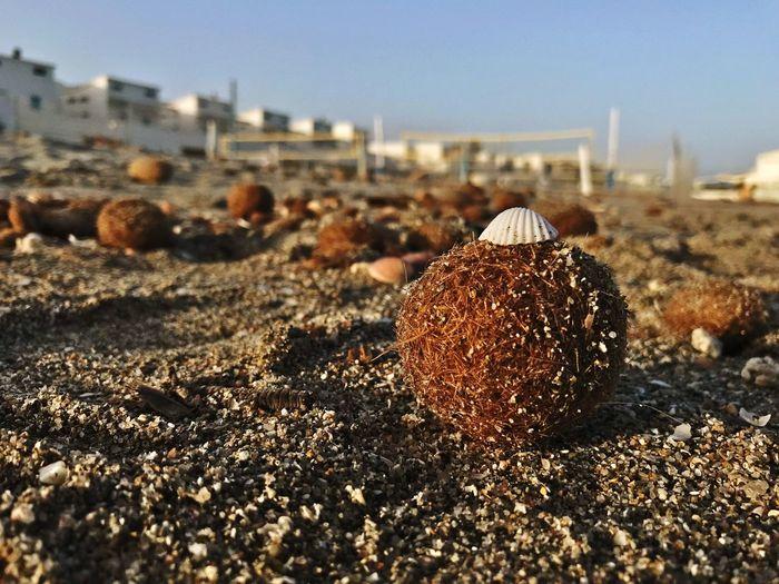 Close-up of plant and seashell at beach