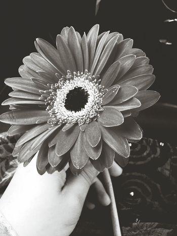 Capa Filter Blackandwhite Flowers Morning