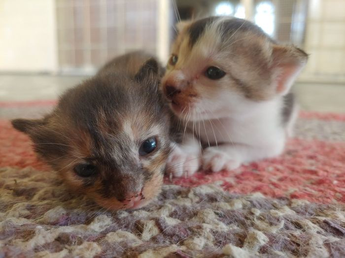 Portrait of cute kitten on rug at home