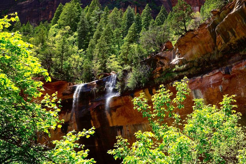US Nationalpark USA Southwest Zion National Park Nature Outdoors Rock Formation